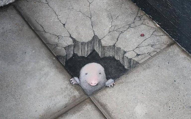 咦?地上怎麼會有小動物!街頭粉筆畫藝術家 David Zinn的路面畫本!