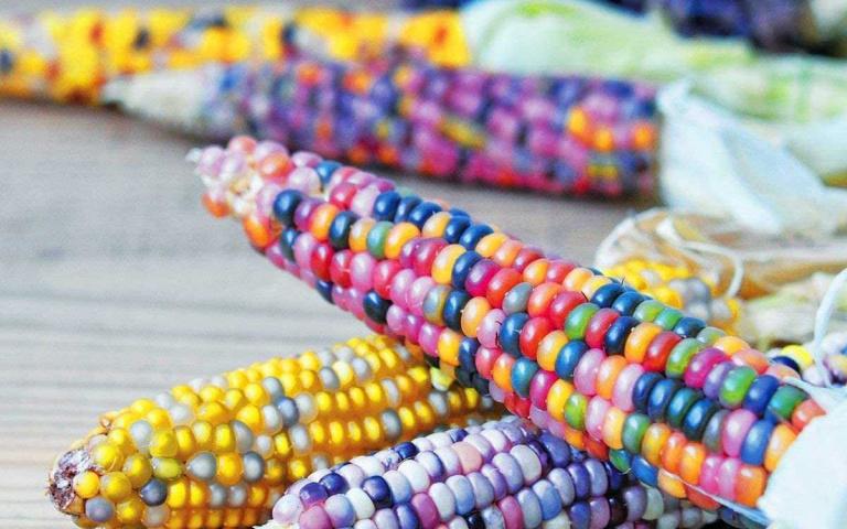 美到想串成項鍊!閃瞎人眼的「玻璃寶石玉米」,捨不得吃就拿來供奉吧!