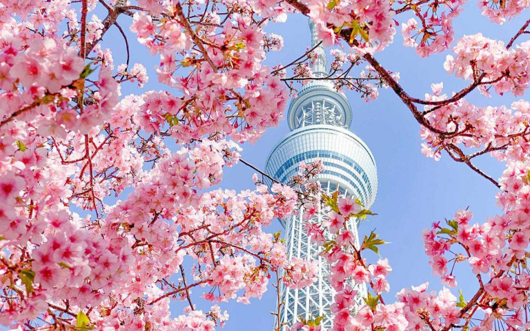 東京晴空塔大規模改裝!主打輕旅行主題 邀請兩大台灣味美食進駐