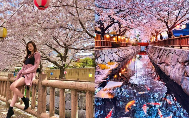 走過「櫻花隧道」嗎?你不知道的「鹿之井出水」,完全媲美目黑川!