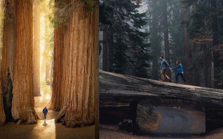 走進巨人國的魔幻森林,去看世上唯一拍不出全身的樹!