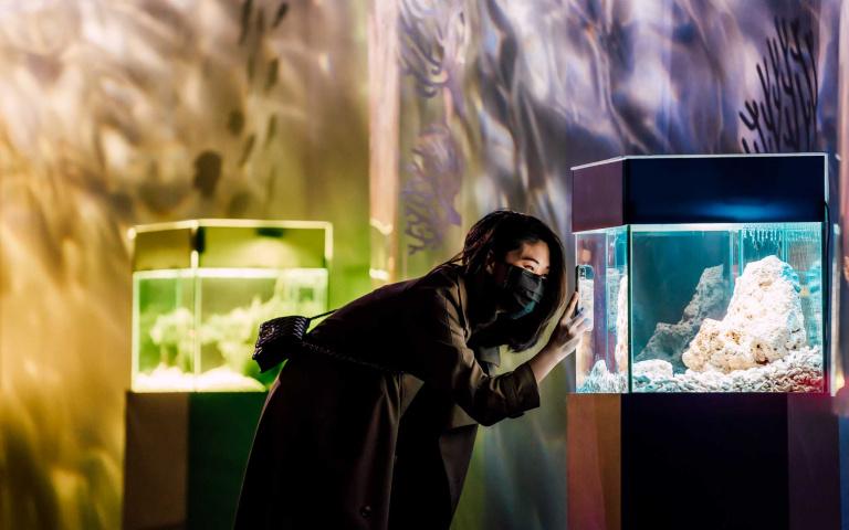 屏東海生館新年首發 七彩海洋生物展示 色水廊道夢幻登場