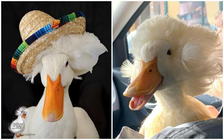 天生自帶髮膠的鴨子,就算洗完澡髮型也絕對不會崩壞!
