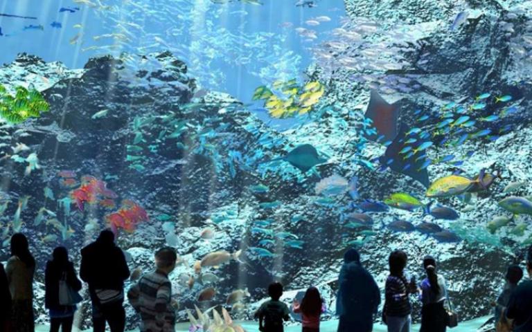 日本八景島海島樂園 海外首站「Xpark水族館」插旗桃園