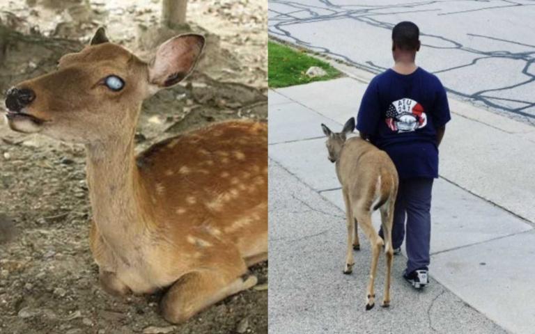 無敵暖!10歲童每天早起「陪瞎眼小鹿覓食」,鄰居超感動「拍下珍貴背影照」!