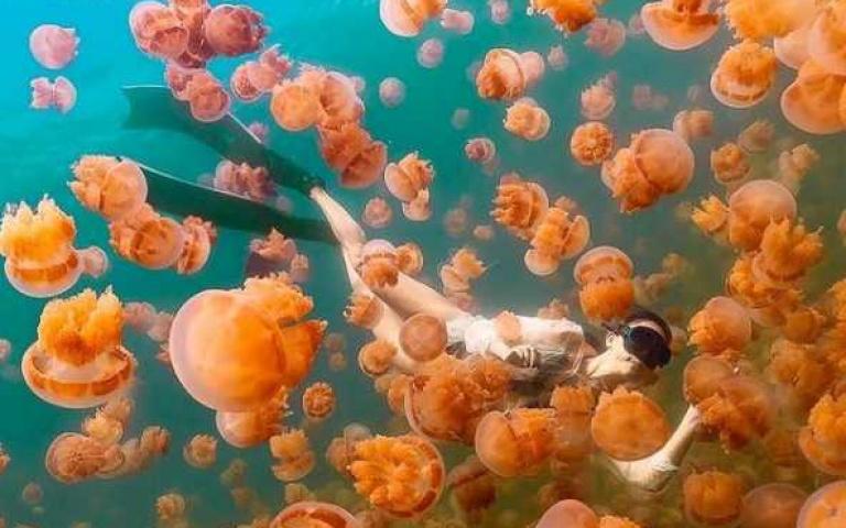 帛琉泡泡旅遊將成真?絕美水母湖、牛奶湖保證美哭你 快把護照、比基尼準備好衝一波!