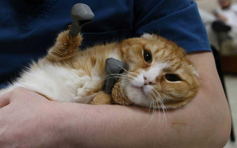 毛孩截肢 就毀了一生嗎? 非也~非也~俄羅斯獸醫Gorshkov 利用3D列印 讓毛孩重獲新生!