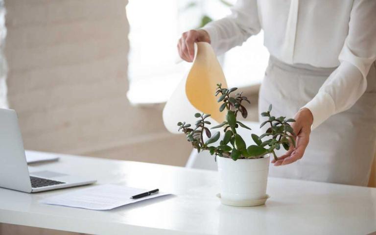 新年新氣象!適合種植在辦公桌的6種盆栽,網美型、發財型都有!