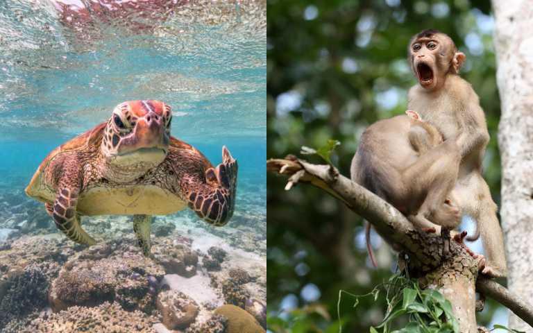 動物界諧星在這裡!搞笑動物攝影獎得獎名單,幽默到讓人笑不停