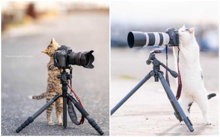 貓咪反串攝影師:「不要每次都你們拍我,這次輪到我了!」