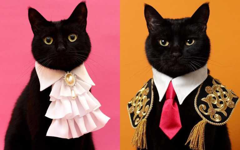 貓皇殿下駕到!拼布達人製作各式精緻項圈質感破表!