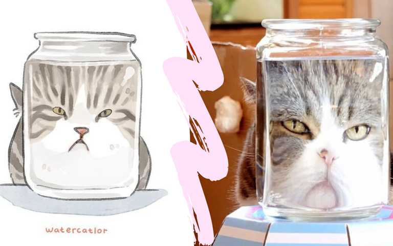 迷因喵也可以很溫柔,隻隻都是確有其貓!