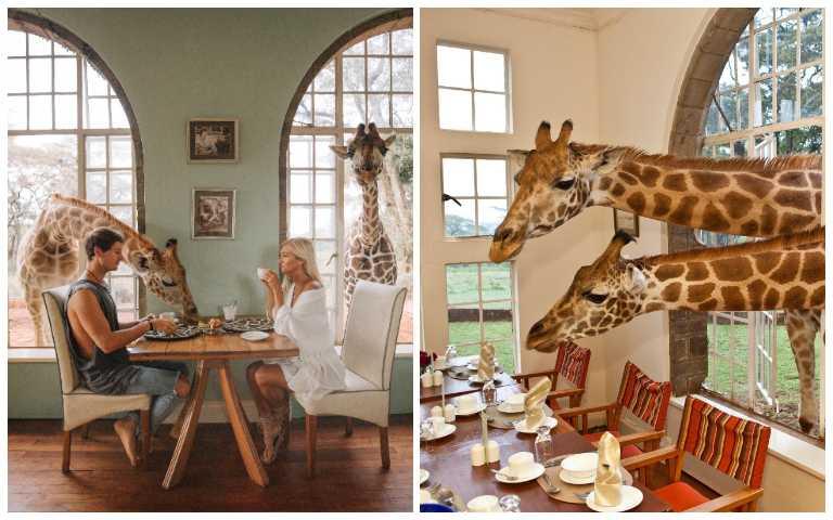 浮誇系飯店!想和長頸鹿共進早餐,沒提早個2年預訂還訂不到!