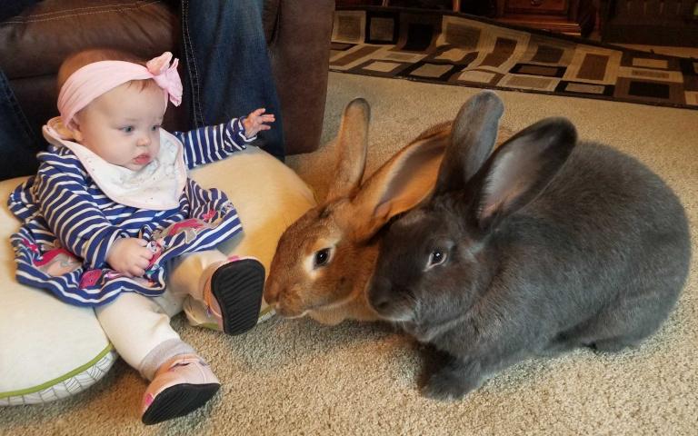 寶寶一哭就跺腳!雙巨兔化身盡責保母 還成「治療兔」撫慰人心!