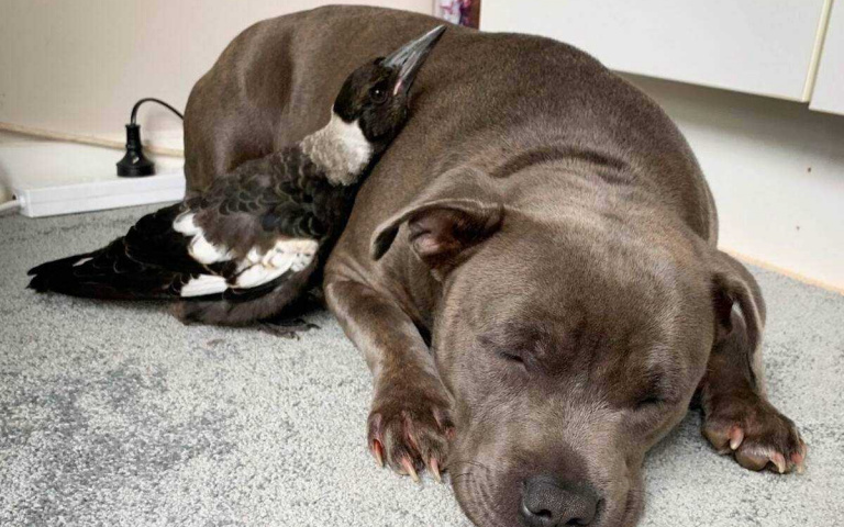 又是個狗狗跨越種族的友誼!來自澳洲的Peggy與 Molly 的溫馨小故事~