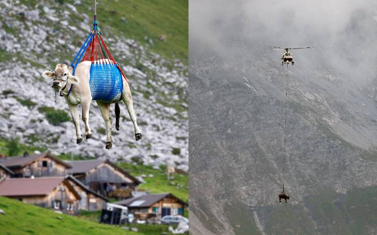 天外飛來一「牛」!VIP專機接送「吊掛下山」參加盛會,乘客愣:「我是誰?我在哪?」