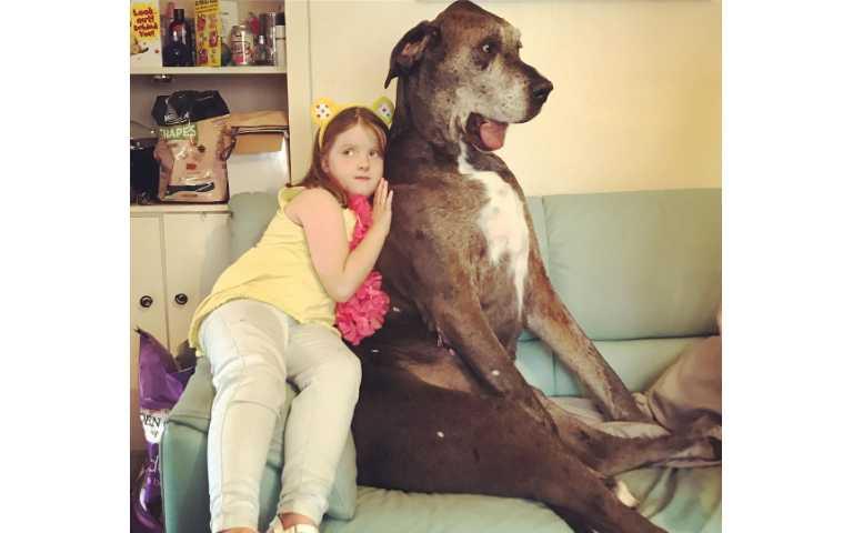 進擊的巨狗!世界最大的10種狗狗,站起來都比球星還高啦!