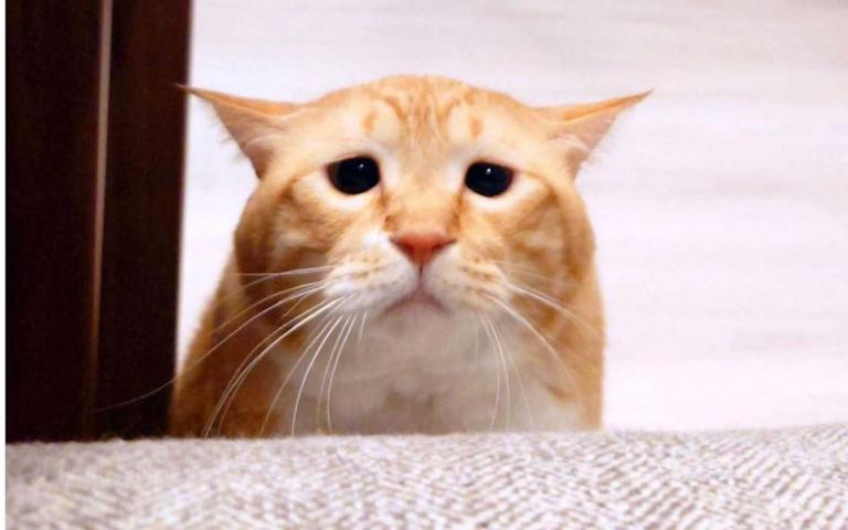 苦情界第一把交椅!橘白貓天生苦命相 + 嘴邊肉超圈粉!