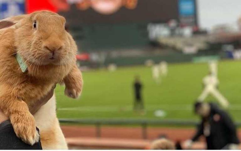 看棒球賽看出名!美國半歲兔寶一炮而紅,粉絲齊喊:「要不考慮取代吉祥物?」