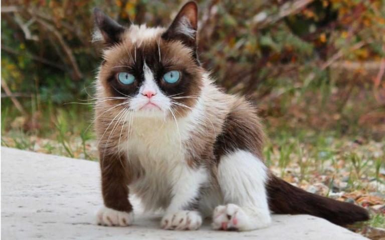 別讓喵皇不開心!貓咪最討厭人類做的5件事,奴才們千萬不要再犯了!