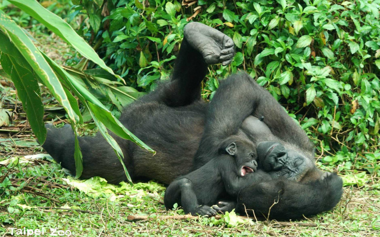 閉園時期動物們過得還好嗎?來看看「沒有遊客的動物園」