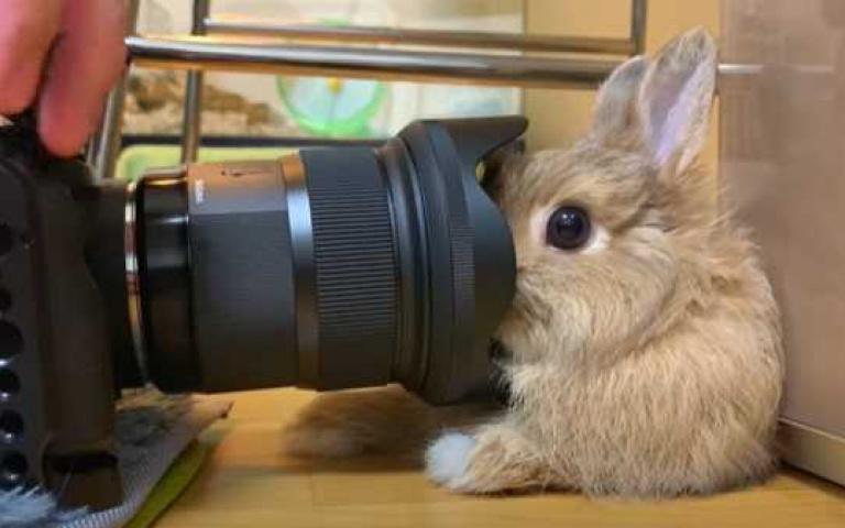 我就靜靜的看著你拍...超厭世兔寶眼神死只想問「爽了沒?」