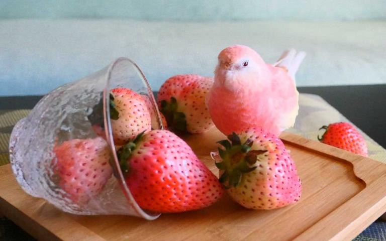 夢幻蜜桃色鸚鵡!毫無違和與草莓、水蜜桃混在一起