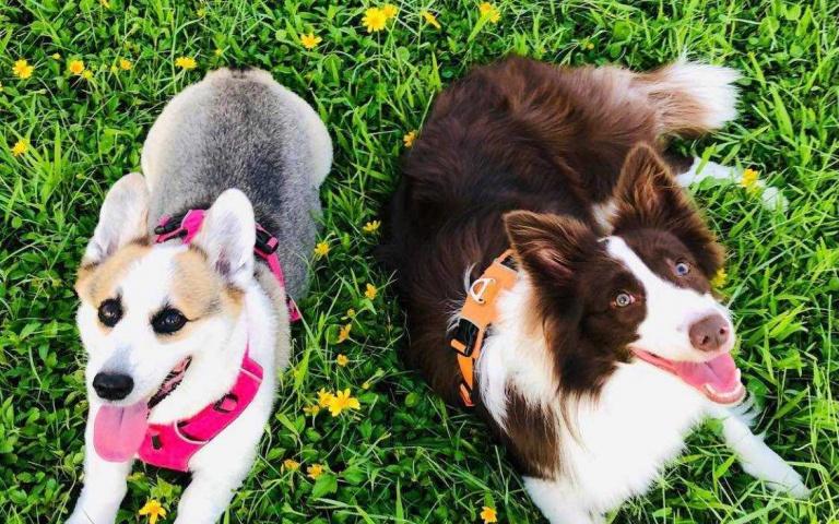 同窗好友 攜家帶狗去旅行! 除了狗以外還養了更多的寵物豐富了居家生活~