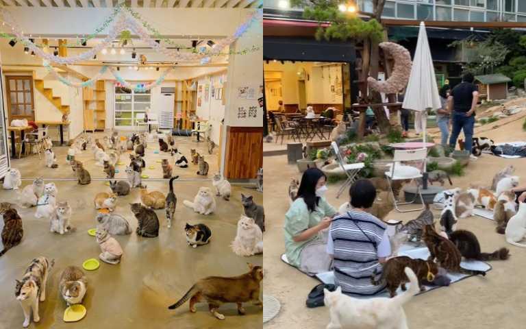 貓奴的天堂!首爾「貓咪庭園」咖啡廳,邊「吸貓」邊喝咖啡超幸福!