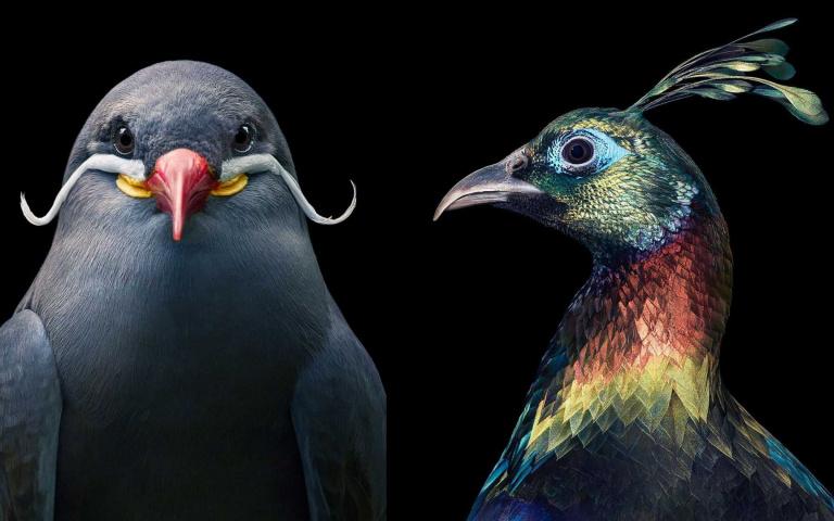 透過攝影大師的鏡頭,把鳥當人拍的HD高清證件照!