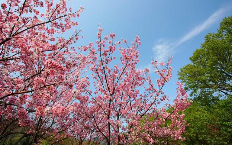 花都開好了!春季四大賞花景點推薦 讓你絕美夢幻美照拍不完