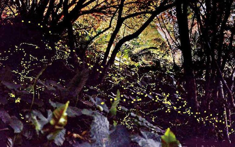 【玩家帶路】夜衝竹苗 螢火蟲作伴遊祕境