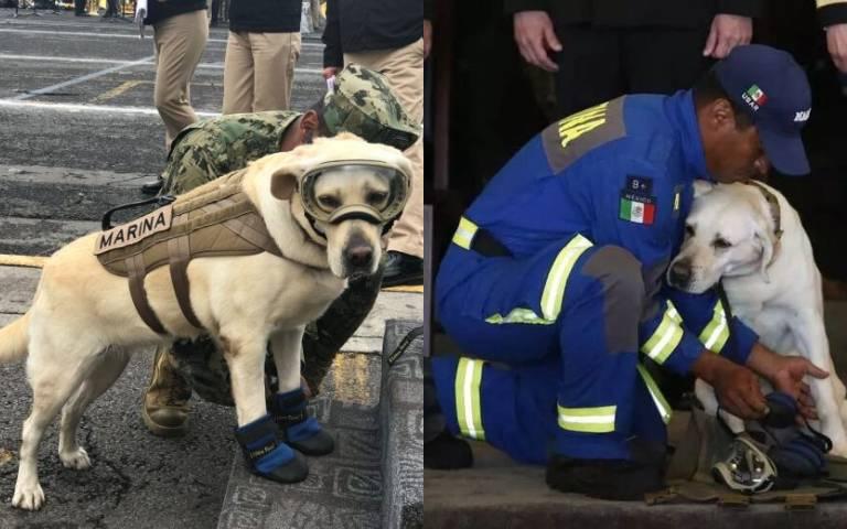 曾救出50多條命!搜救犬光榮退休「一生奉獻給人類」,「裝備換玩具」終於能當普通狗!