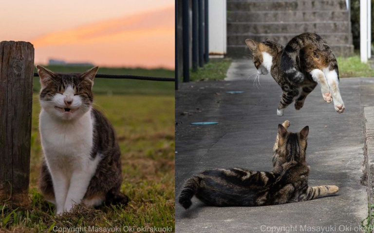 最懂街貓的攝影師!就是能抓住每隻貓咪的瞬間
