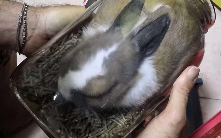 差點一秒變標本!兔寶為吃淡定卡瓶罐,「再讓我嚼五分鐘」!