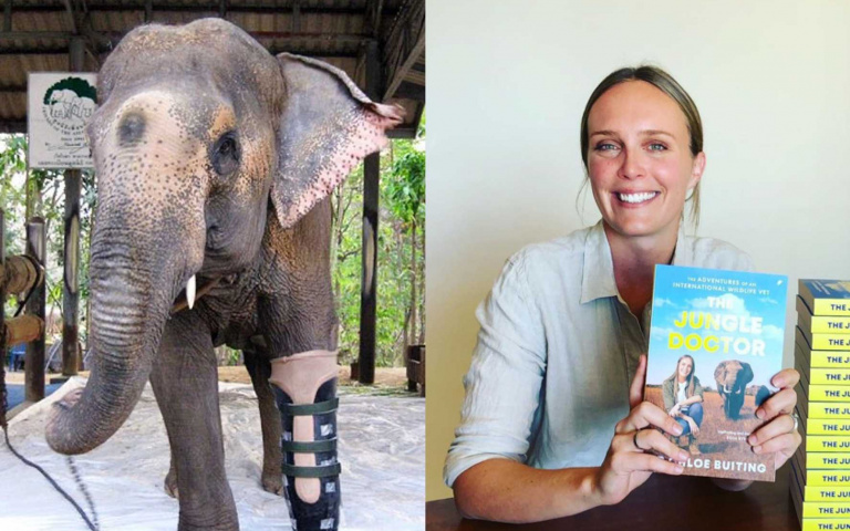 大象誤踩地雷失去一條腿...美女醫生發明「專用義肢」,盼牠重獲新生!