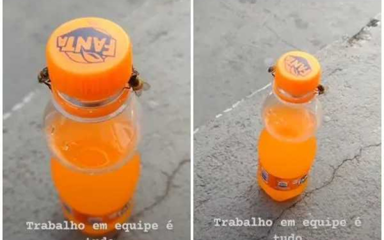 「蜜蜂」為了喝芬達齊心合力一起開瓶蓋!