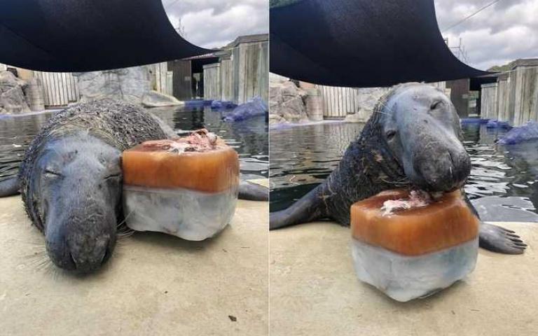 31歲海豹過生日~ 看到「魚魚」蛋糕 笑到眼睛都看不見了!