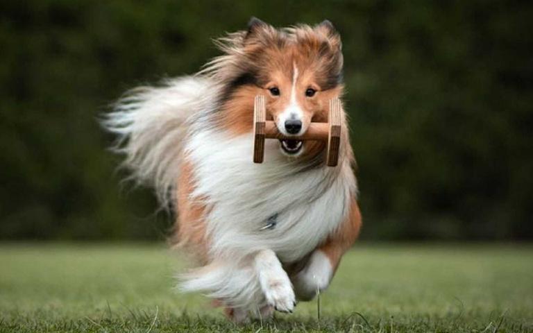 世界最聰明的6種狗狗!來看看你家的狗有沒有入榜吧!