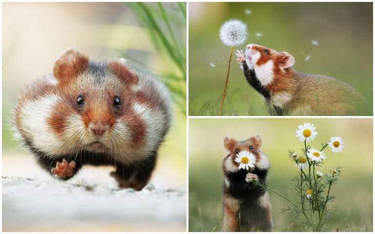超有戲野生倉鼠、松鼠,逗趣表情每張都可以拿來當梗圖!