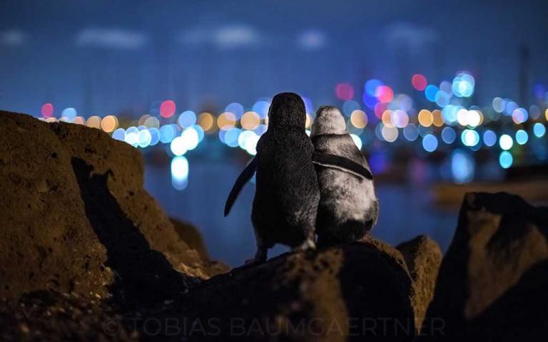 感動人心的畫面!德國攝影師拍下兩隻喪偶企鵝彼此陪伴的瞬間