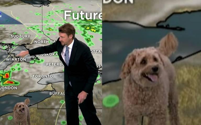 汪汪撞名「氣象術語」以為被點名!主播「新聞播一半」遭愛犬亂入:你找我幹嘛?