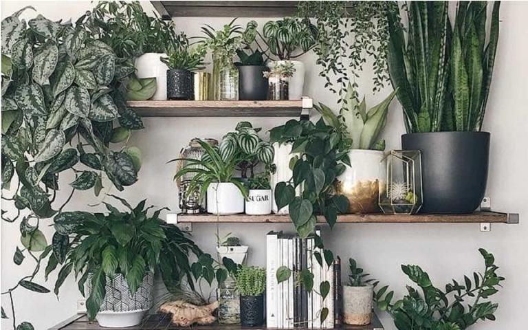 手殘黨看過來!7種養不死的植物清單,誰都輕鬆照顧好!