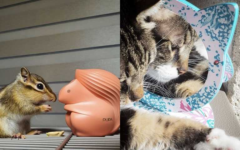 可愛爆擊!小松鼠彩盤、貓咪立鏡、哆啦A夢化妝包 一秒融化少女心的超萌美妝來襲~