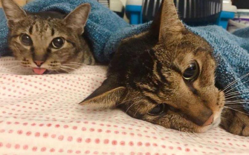 大霈聞受虐貓哭聲急救援 怒堵飼主求過年前領養