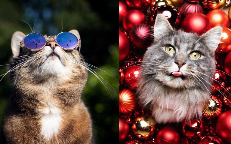 看完專業攝影師的手把手教學,自己也能嘗試的貓貓寫真!