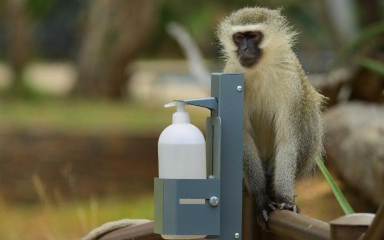 動物與環境重現生機!疫情下的《這一年,地球變得不一樣》