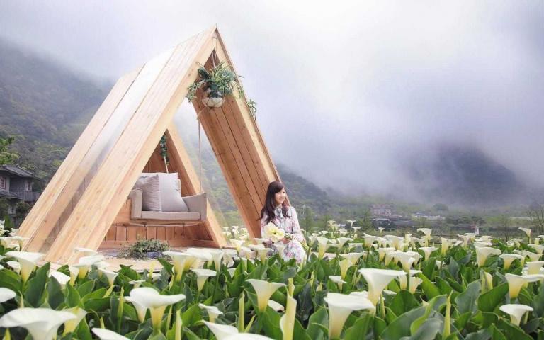「花」現陽明山 海芋季打卡10地景 球根花卉展把握最後花期