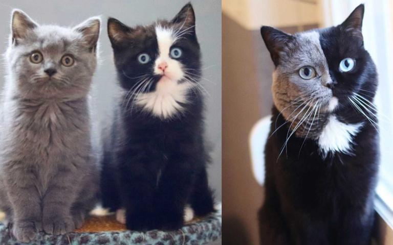 完美的「解壓縮」!兩個孩子組合起來就是灰黑半臉的貓爸爸