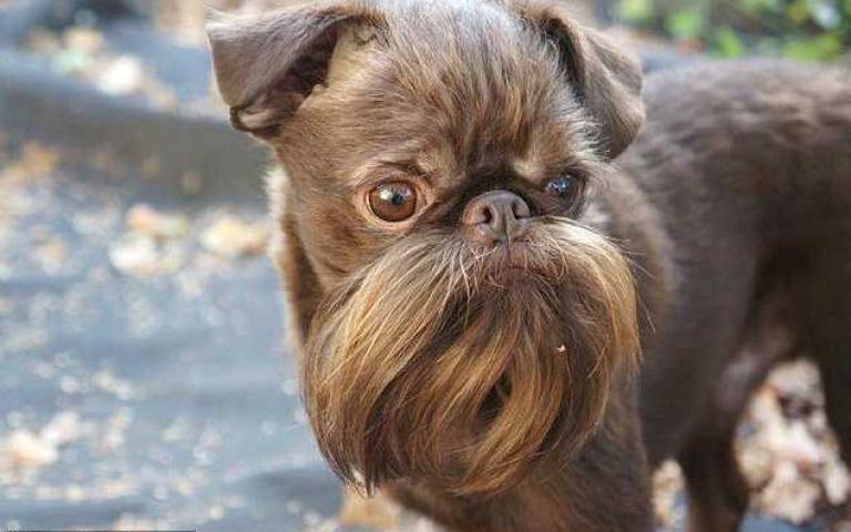 「堅果小硬漢」像小老頭?星戰「丘巴卡」?長鬍鬚造型根本是一堆男人的夢想!